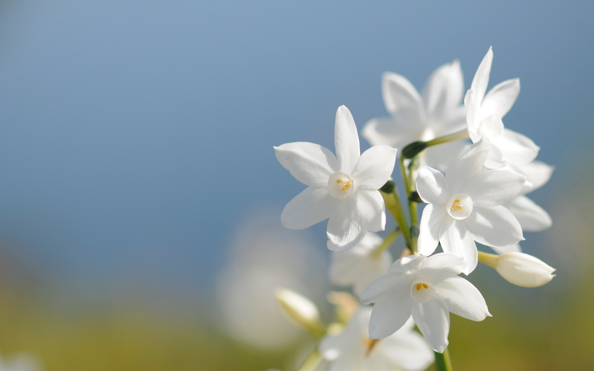 White flowers images savingourboysfo white flowers image wallpaper hd natural flower mightylinksfo