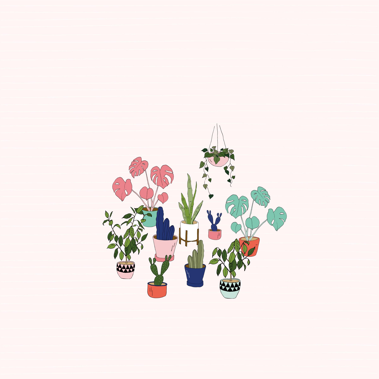 Urban jungle pot plant desktop wallpaper Make and Tell 2401x2401