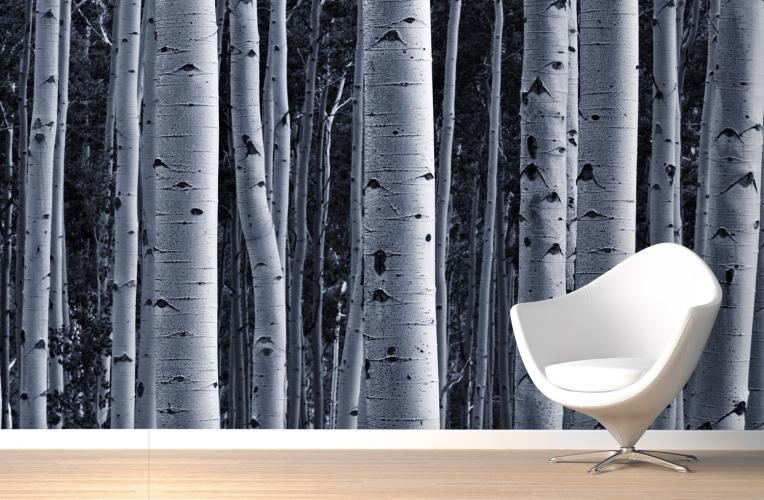 Birch Tree Wall Mural Murawall 764x500