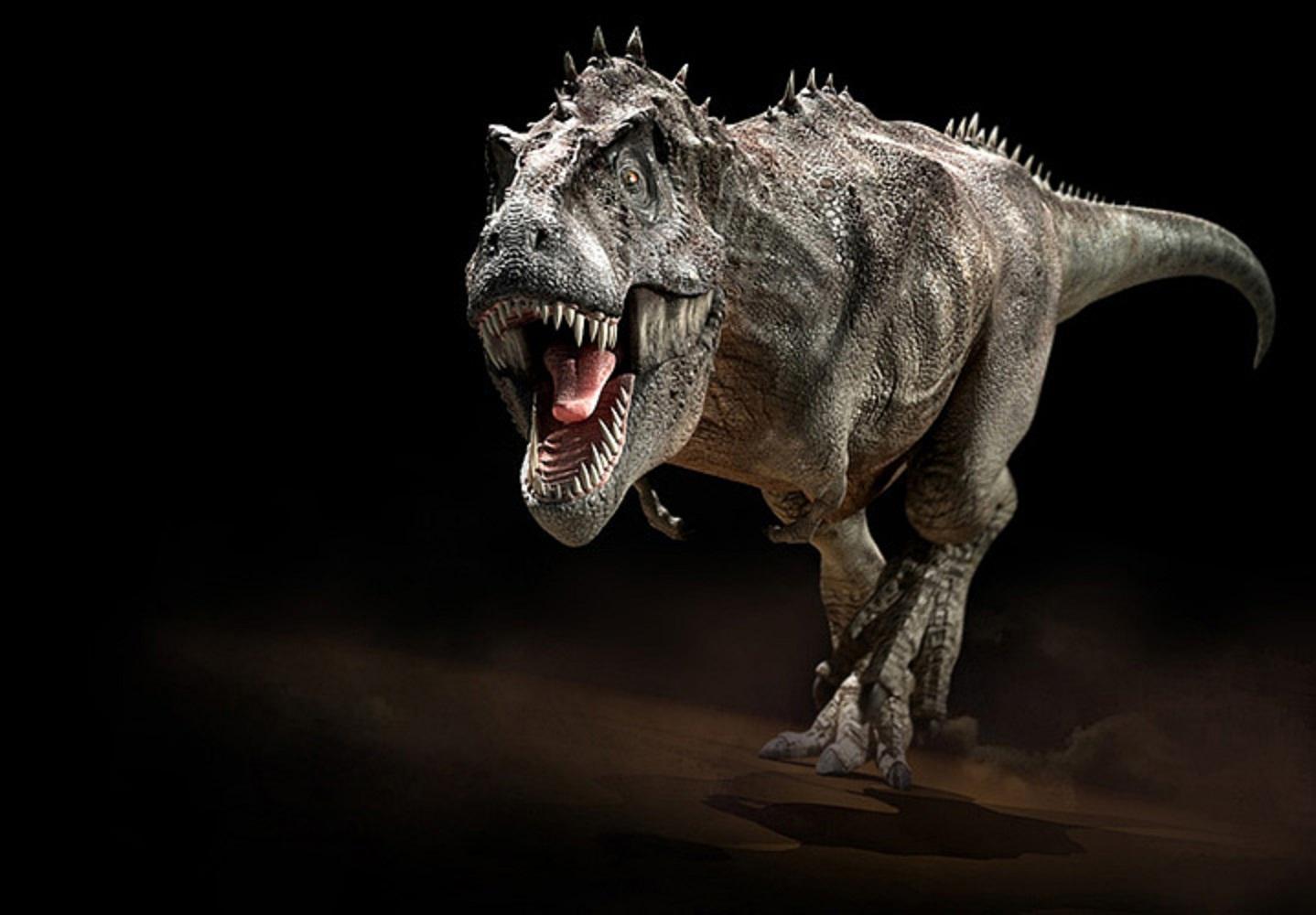 Tyrannosaurus Rex wallpaper   ForWallpapercom 1438x1000