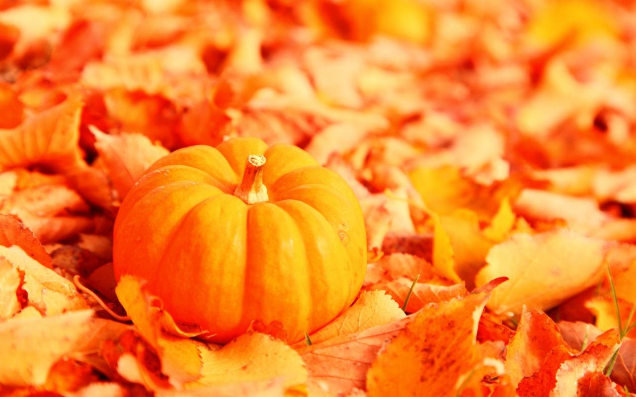 Little Pumpkin With Fallen Orange Autumn Leaves 1280x800 wallpaper 1280x800