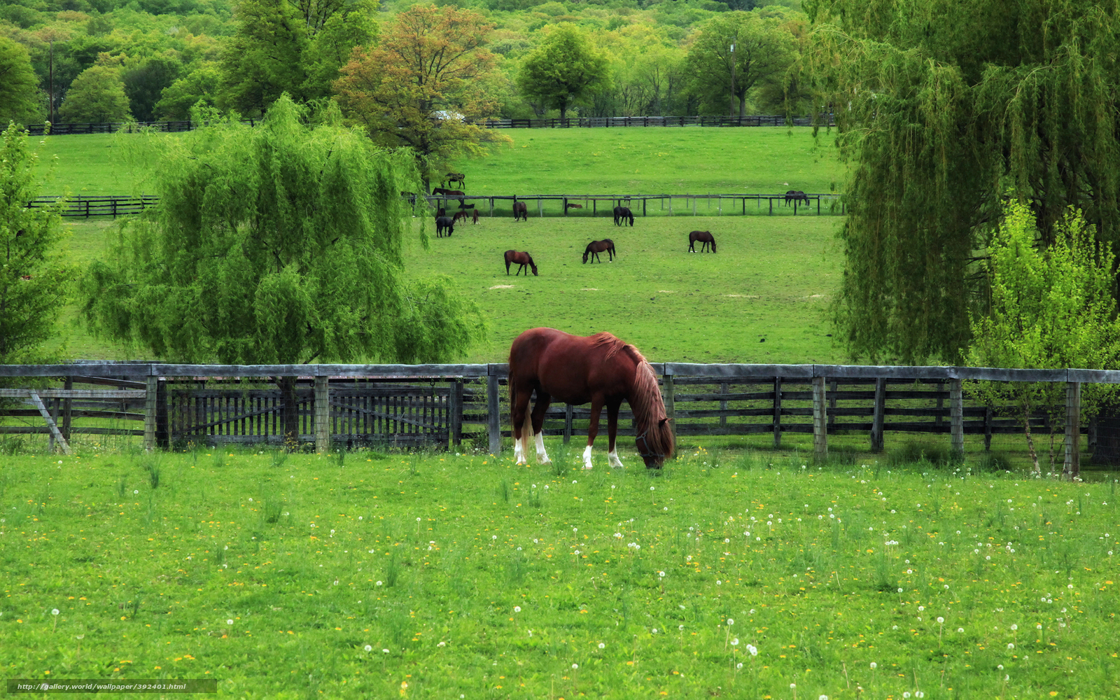 Horses In Springtime Wallpaper WallpaperSafari