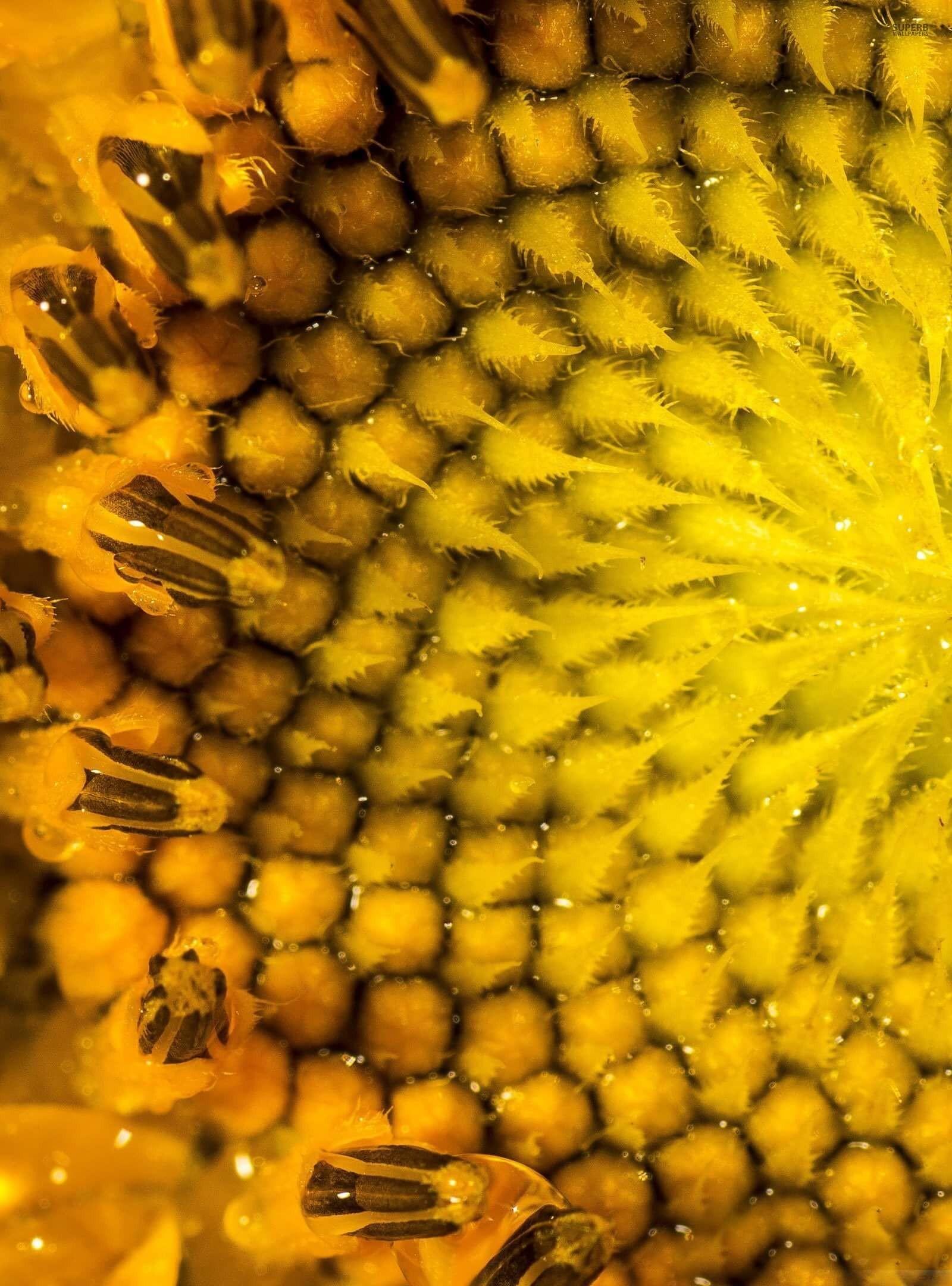 Sunflower Macro HD wallpaper for Kindle Fire HDX 89   HDwallpapers 1600x2160
