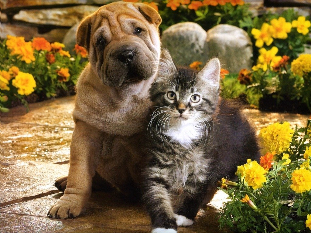 cute puppy and kitten pictures puppy and kitten loving picture puppy 1024x768