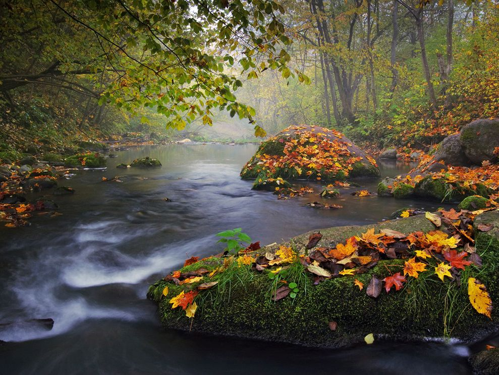 Autumn Landscape Photo Nature Wallpaper National Geographic Photo 989x742