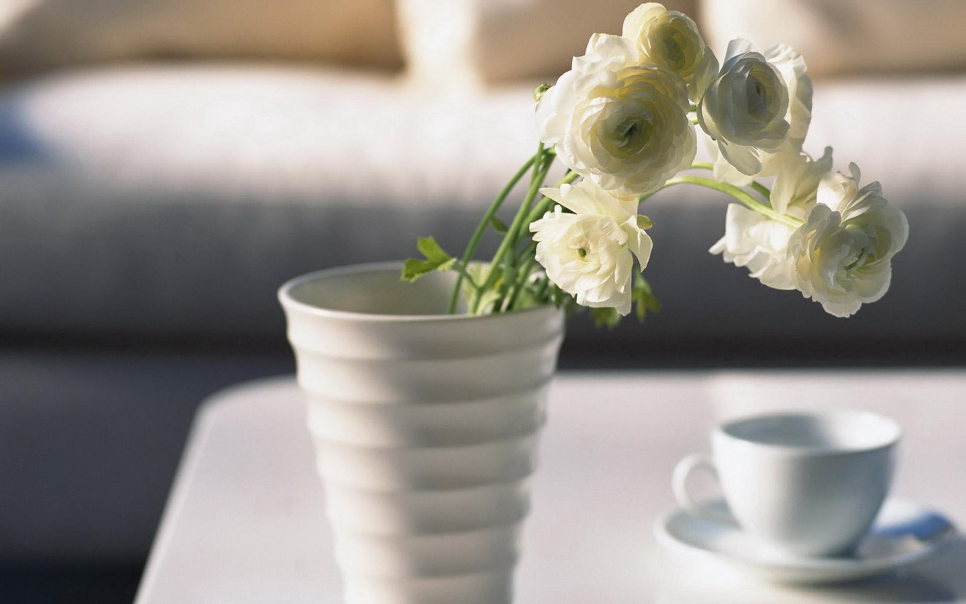 Vase Wallpaper HD Freetopwallpapercom 1920x1200