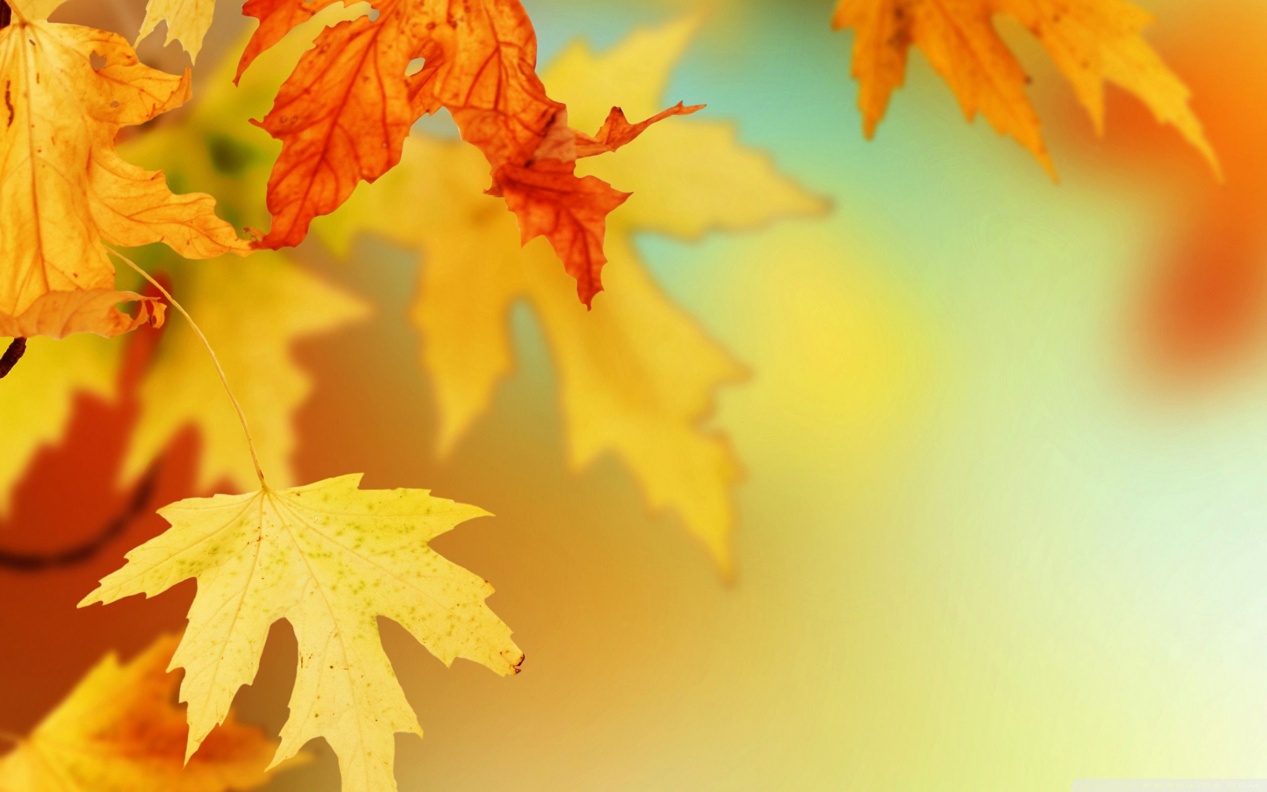 50 Autumn Leaves Clip Art Wallpapers   Download at WallpaperBro 2560x1600