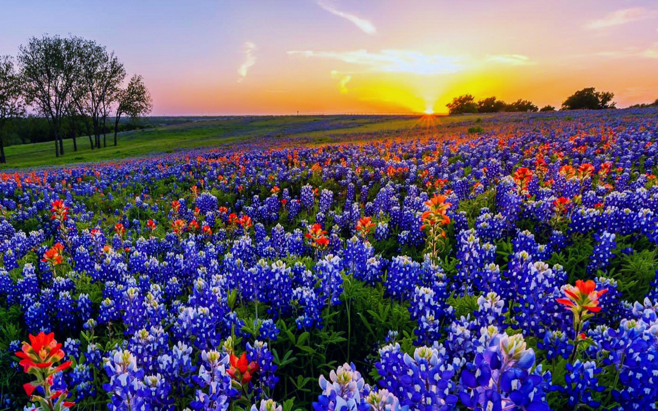 Texas wildflowers HDwallpaperUP 2560x1600