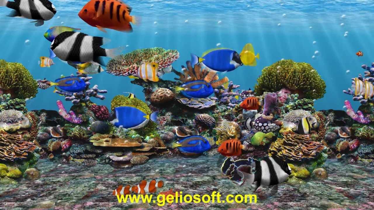 aquarium live wallpaper free for windows xp
