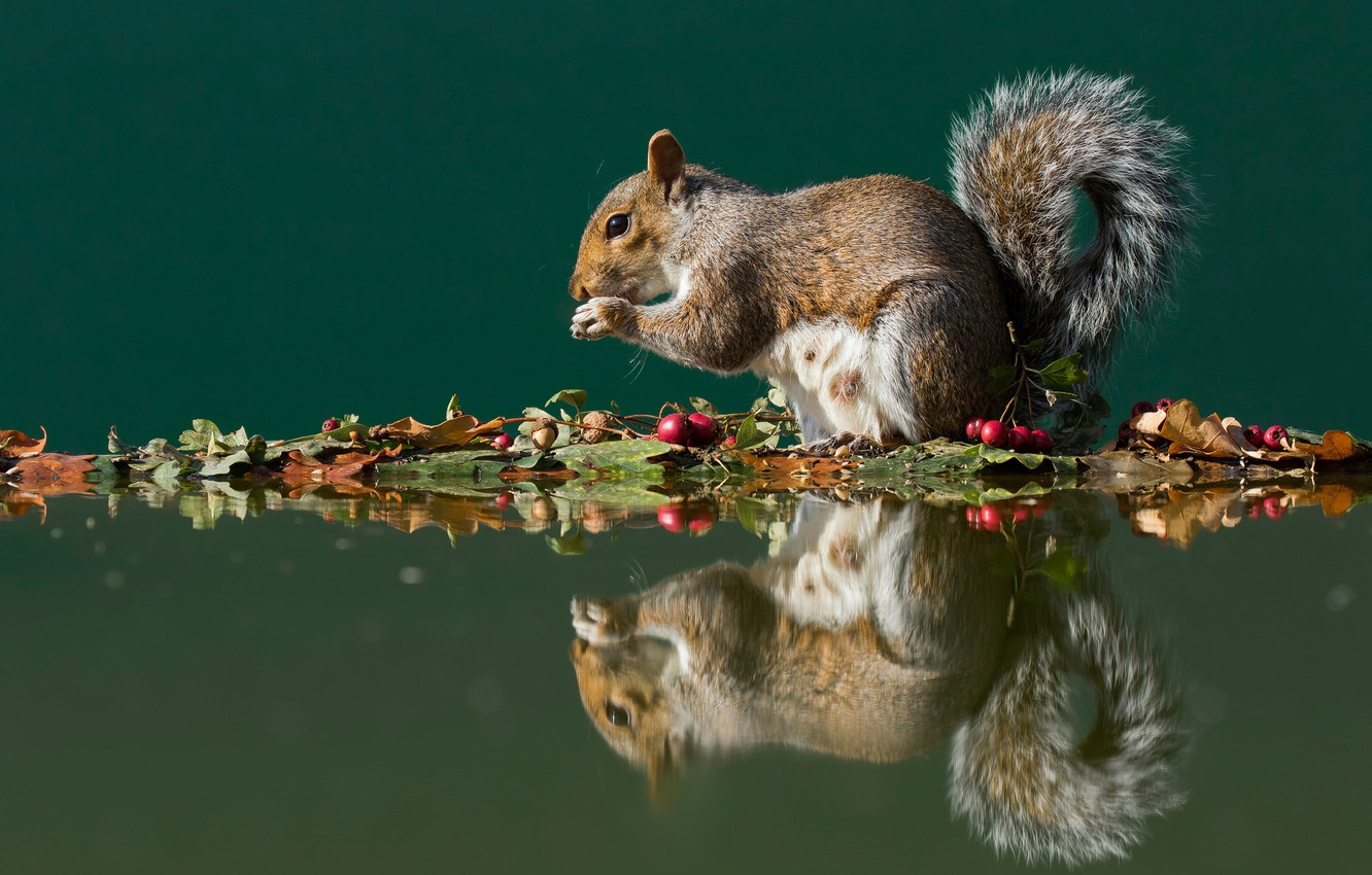 Wallpaper autumn leaves water reflection berries protein 1332x850