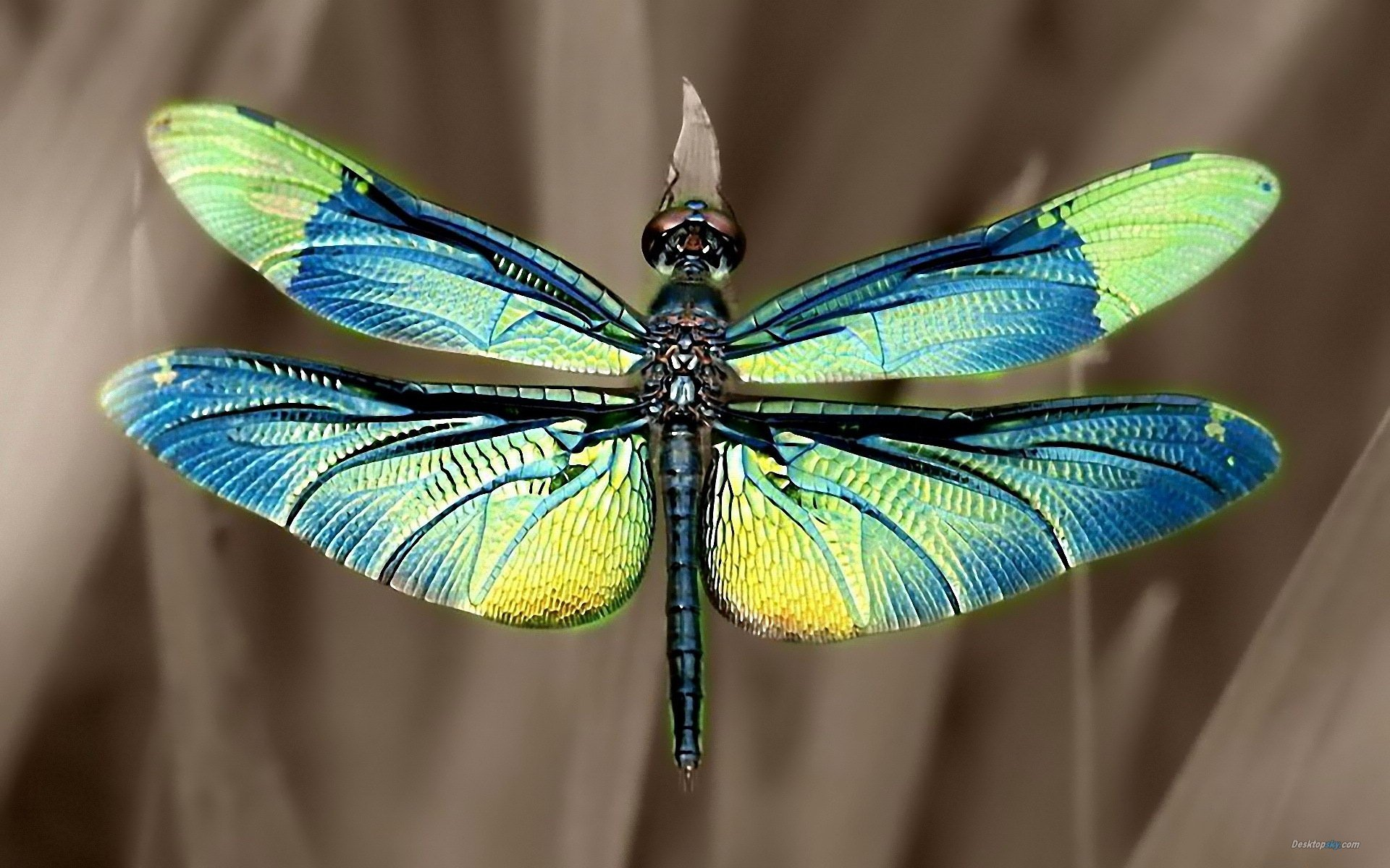 Summer beautiful dragonfly wallpapers 1920x1200 10 1920x1200