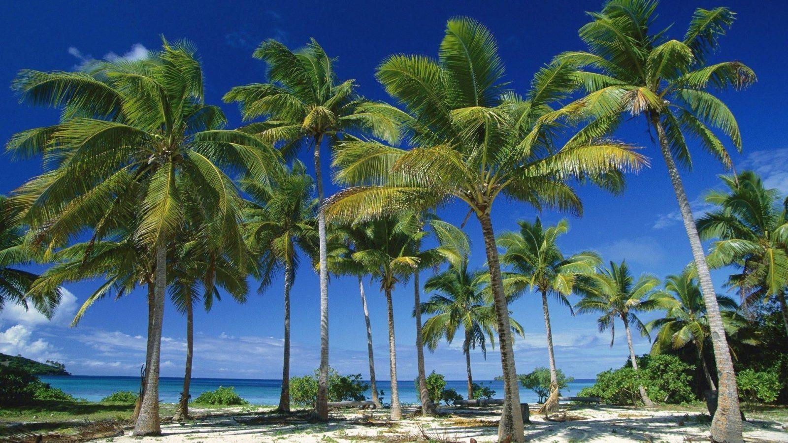 Pics Photos   Palm Tree Wallpaper Palm Tree Desktop 1600x900