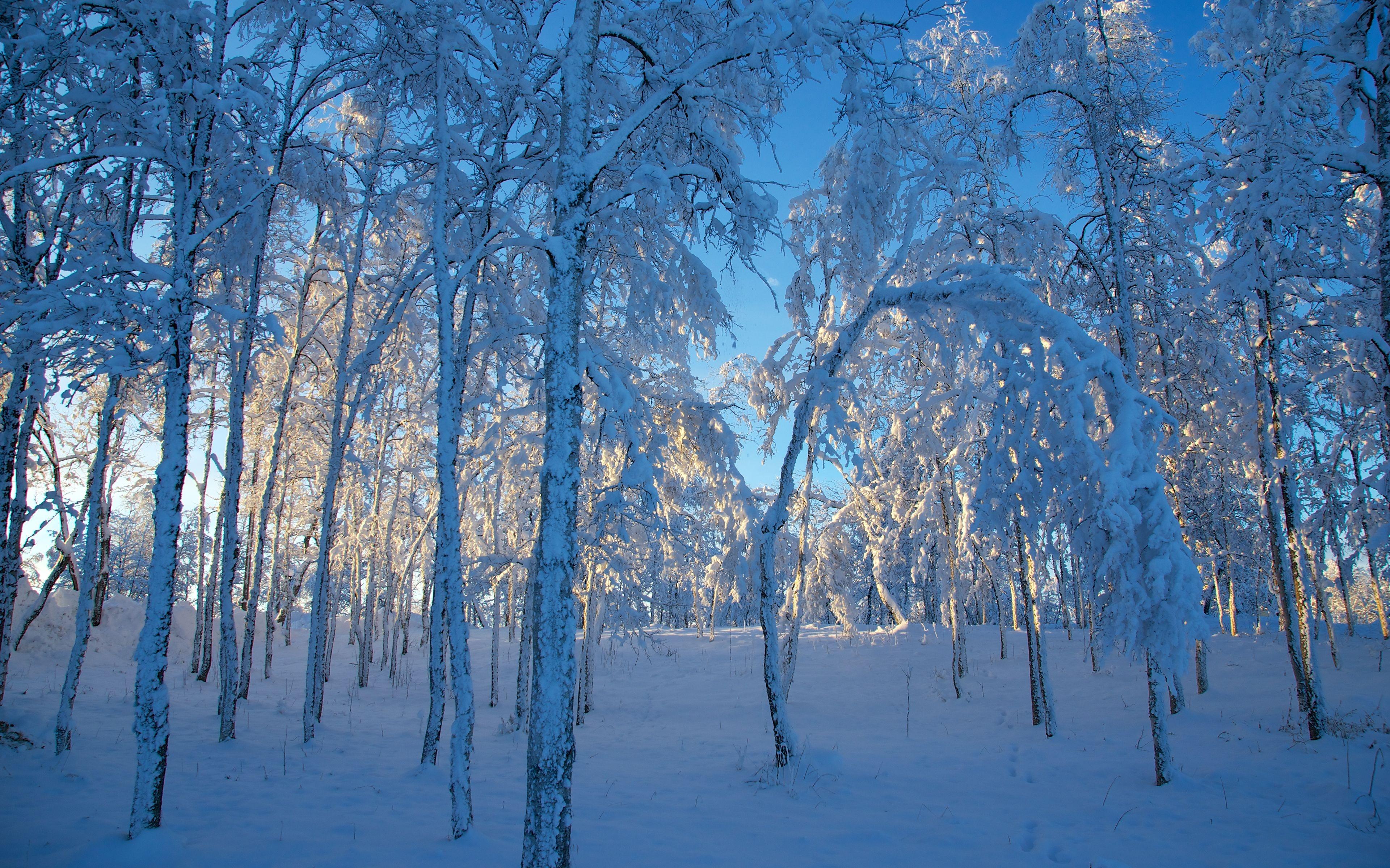 desktop wallpaper winter themes   wwwwallpapers in hdcom 3840x2400