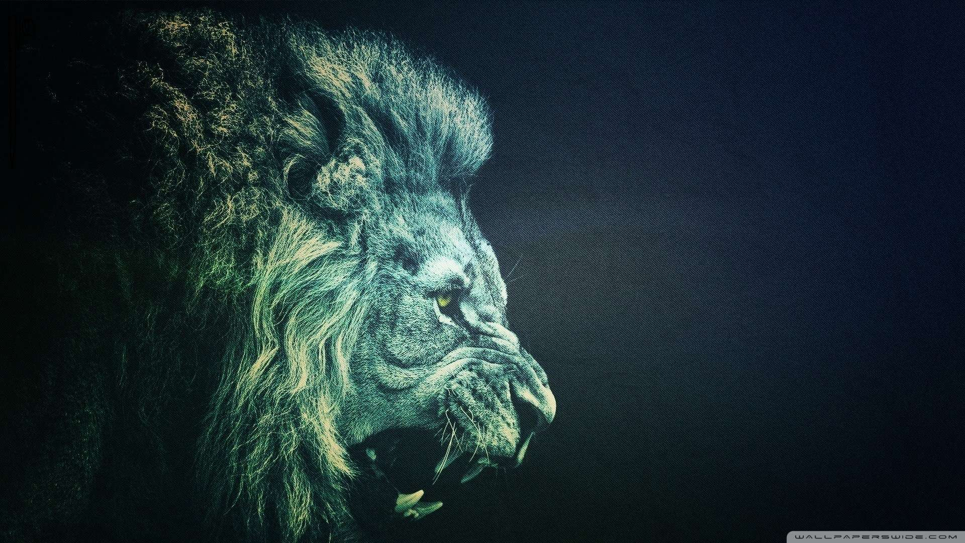Lion Wallpaper HD 1080P - WallpaperSafari
