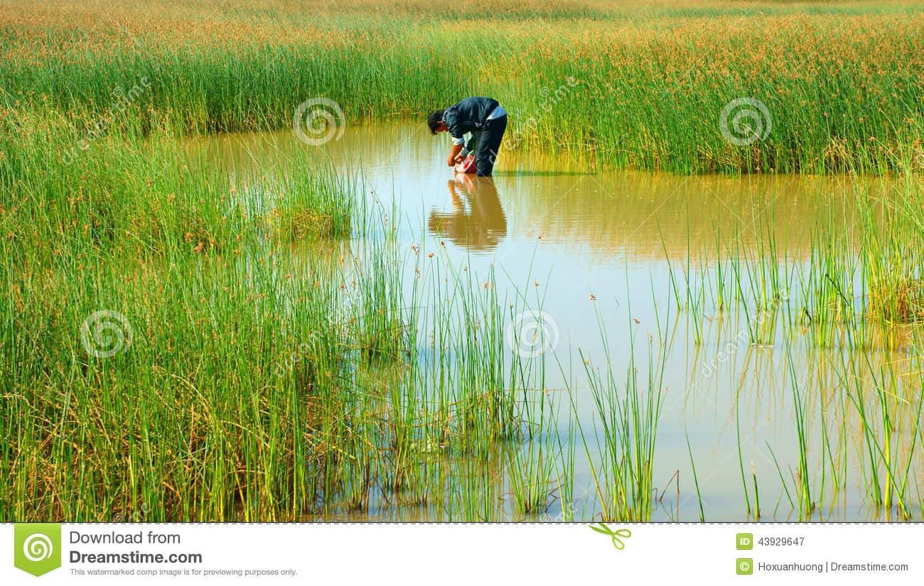 beautiful landscape vietnam countryside ninh thuan jan vietnamese 1300x825