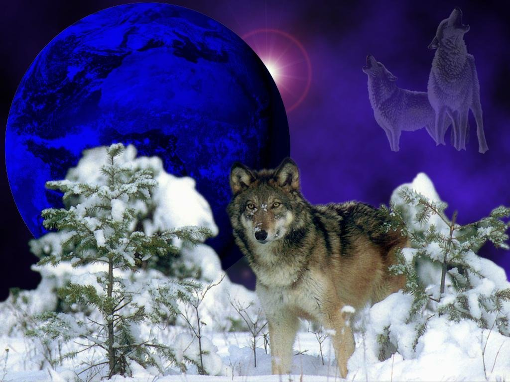 wolf wallpaper Page 3 1024x768
