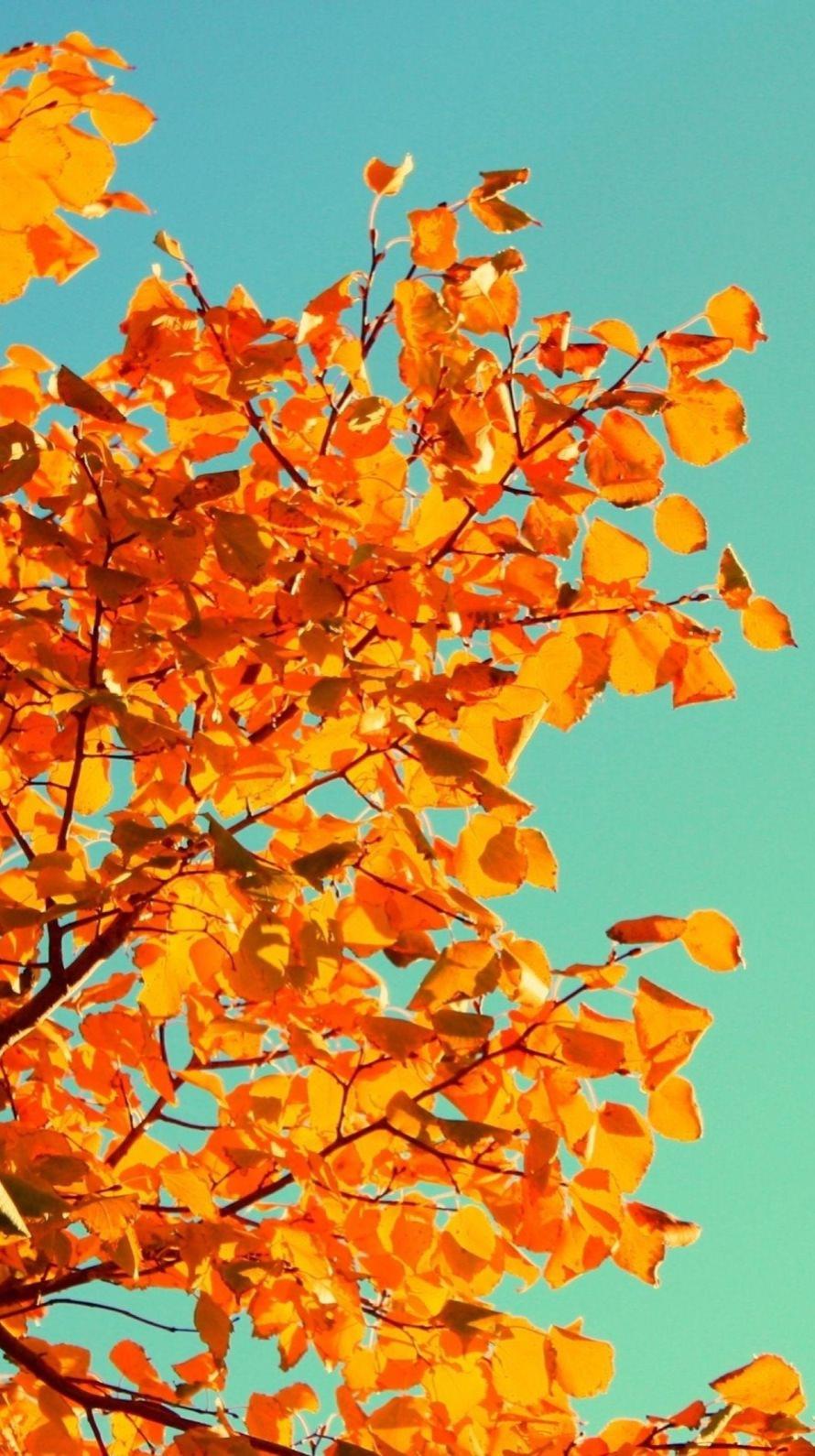 Aesthetic Tumblr Autumn Desktop Wallpaper Cuteanimals