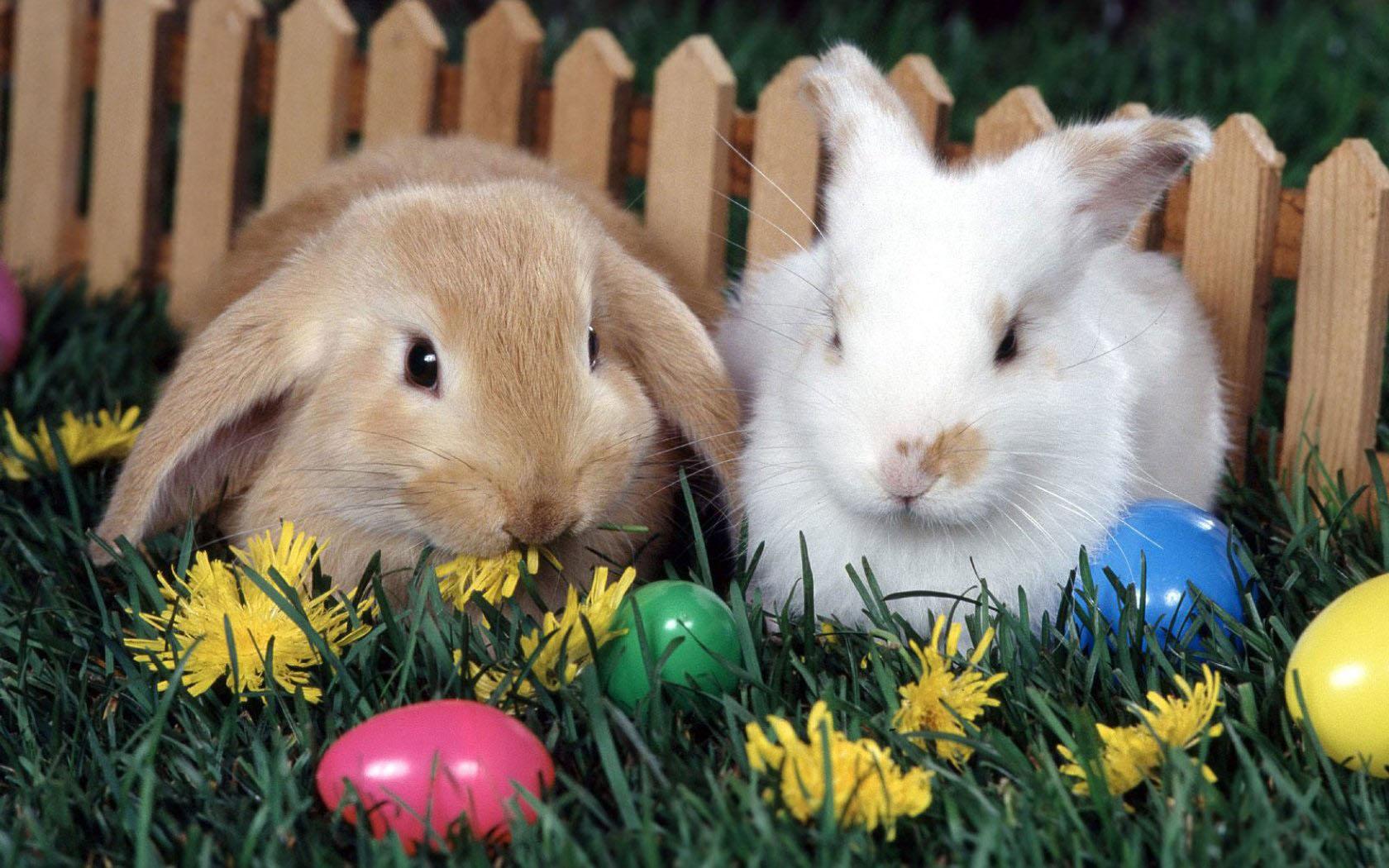Easter Bunny Wallpaper For Desktop WallpaperSafari