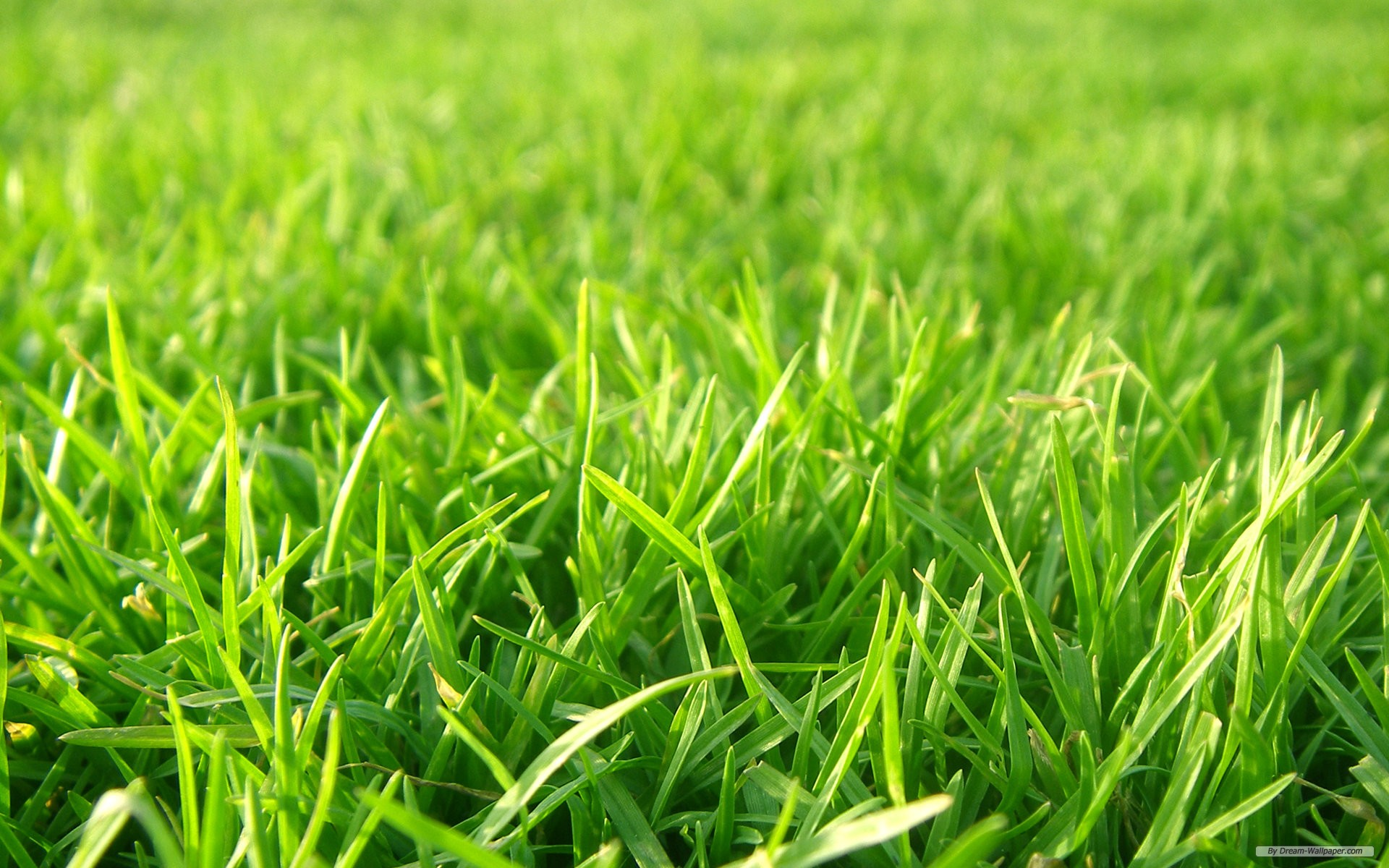 wallpaper nature grass football pitches background 1920x1200