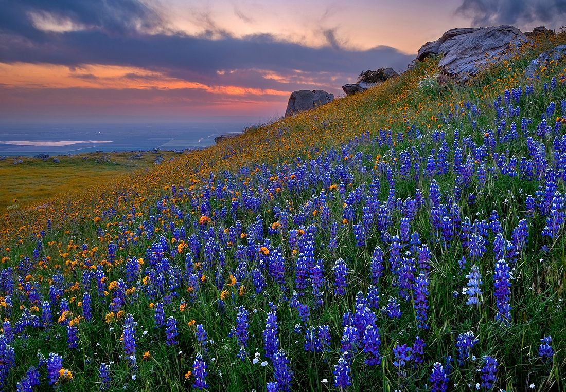 Texas Wildflower Wallpaper Wallpapersafari