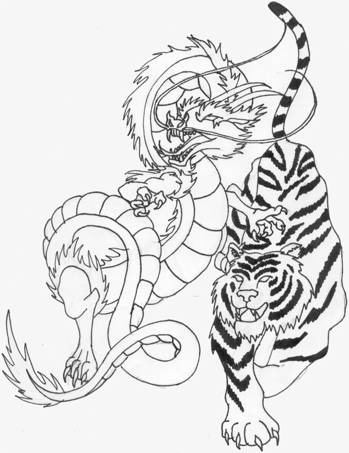 dragon vs tiger wallpaper image search results 693x900