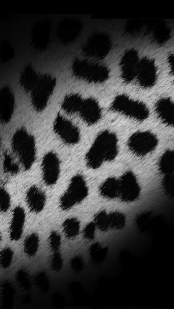 and White Leopard Skin iPhone 6 6 Plus and iPhone 54 Wallpapers 576x1024