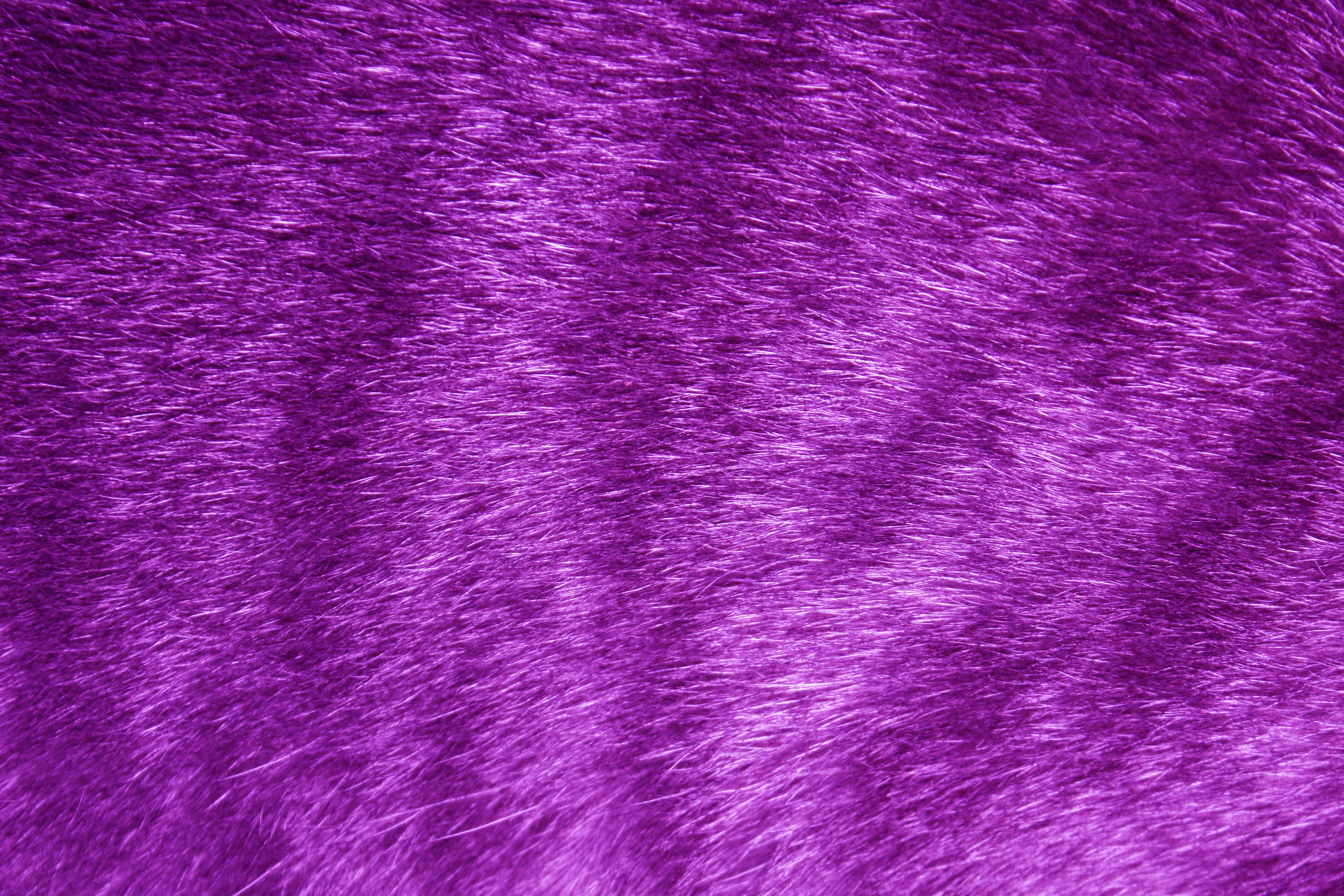 Purple Fur Wallpaper 3000x2000