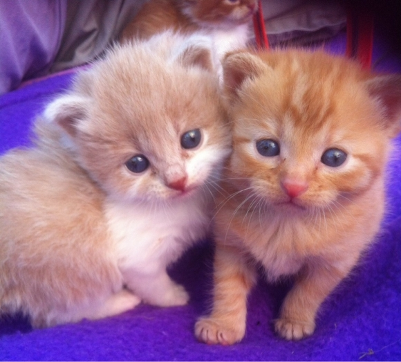 foto kucing lucu keren terbaru saudara ngulik co anak