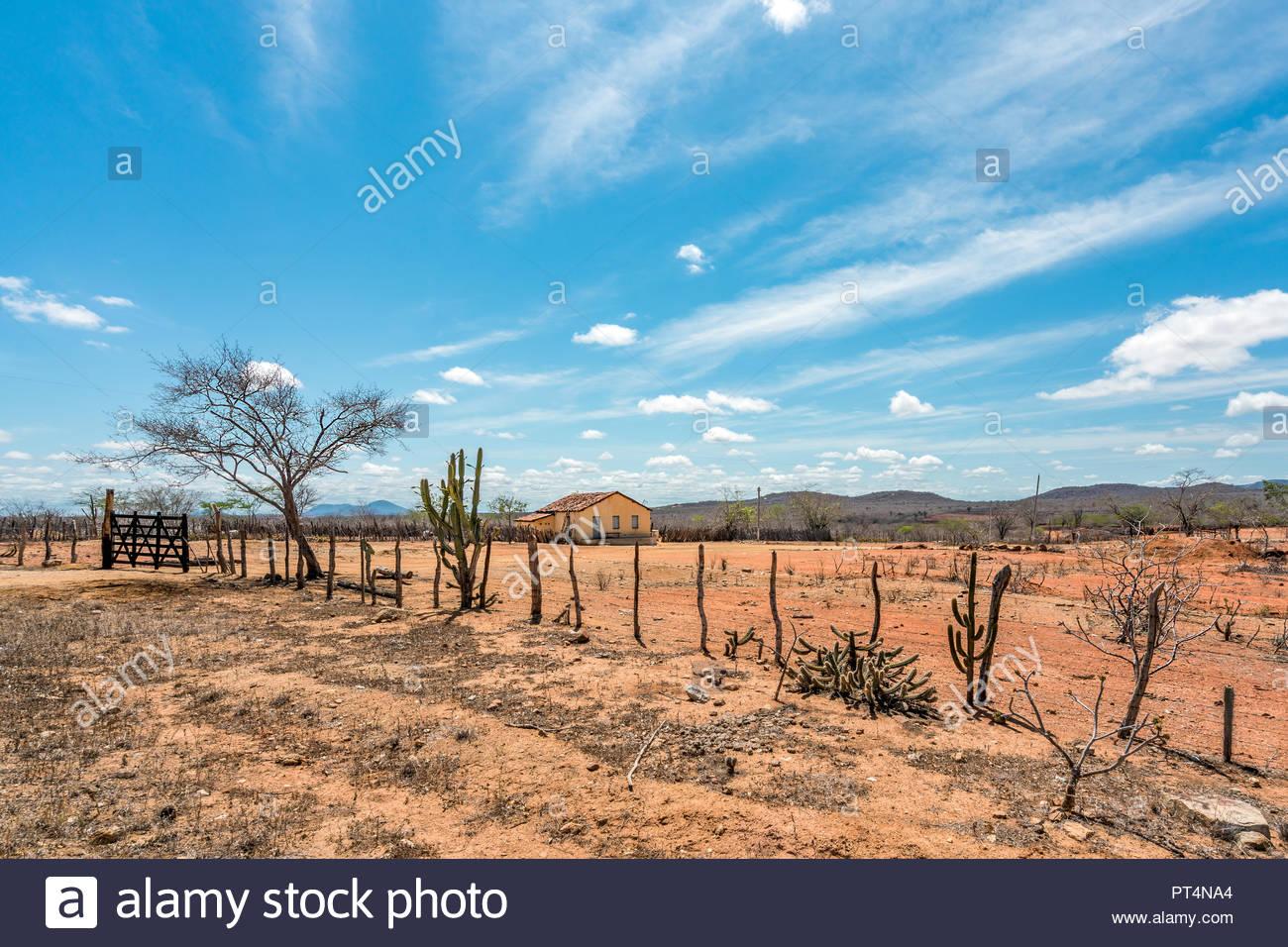 Cariri Paraba Brazil   February 2018 Landscape of a Simple 1300x956