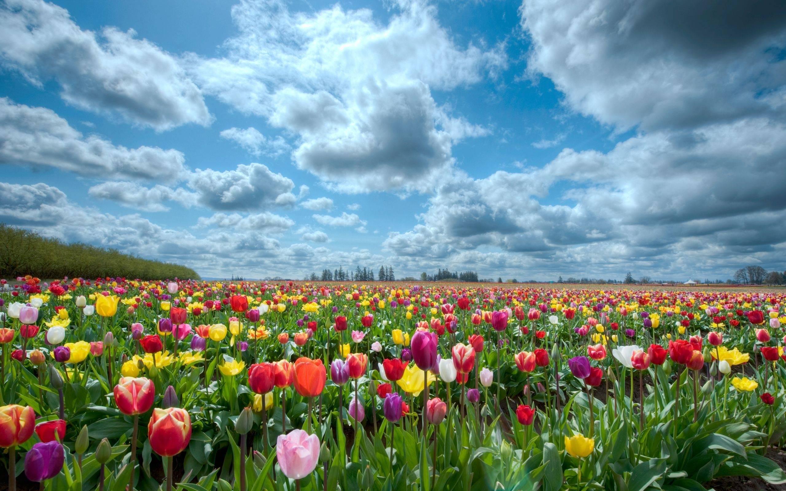 Flower Garden Backgrounds 2560x1600