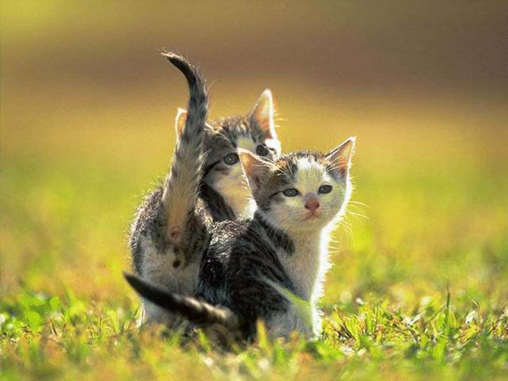 Cute Kittens Wallpapers   Wallpapers 1024x768