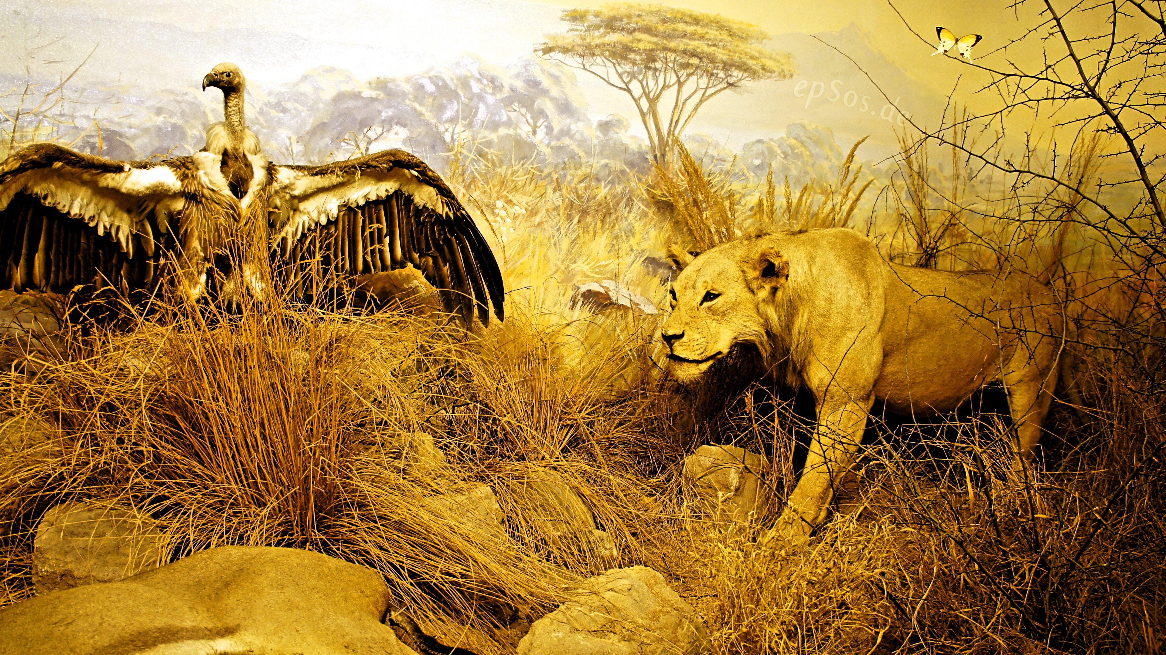 African Safari Wallpaper Wallpapersafari