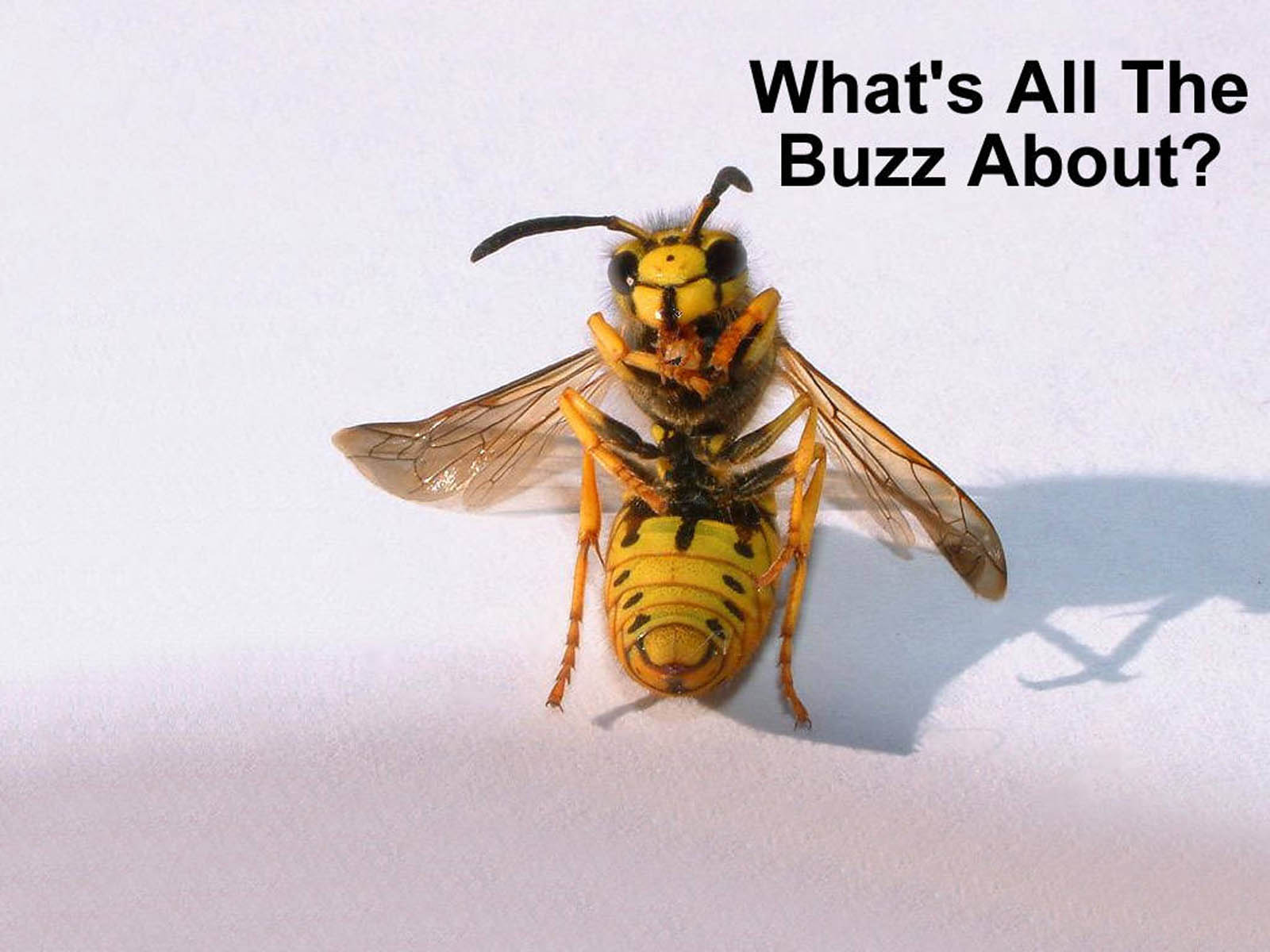 Desktop Wallpaper Insects Funny Backgrounds Humor Wallpapers Download 1600x1200