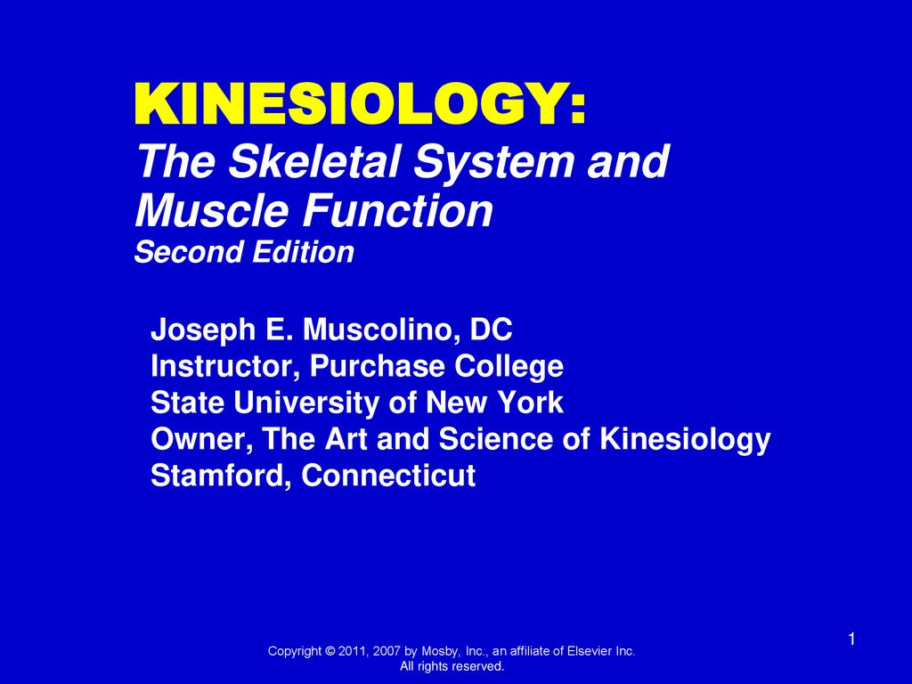 Kinesiology The Skeletal System and Muscle Function   ppt download 1024x768