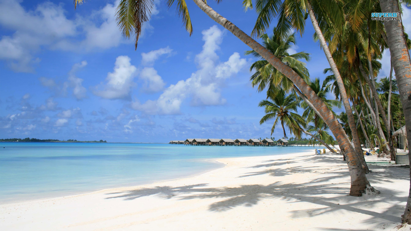 Maldives Beach Wallpaper Palm Tree 6112 Wallpaper WallpapersTube 1366x768