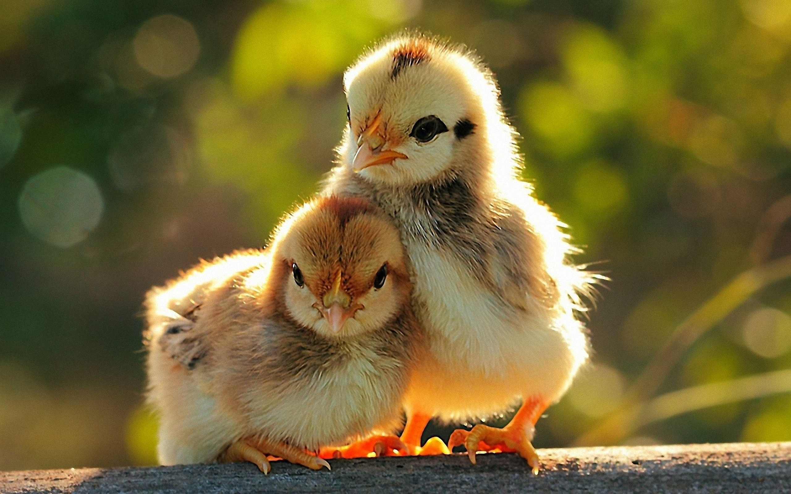 Cute Baby Animal Wallpapers 2560x1600