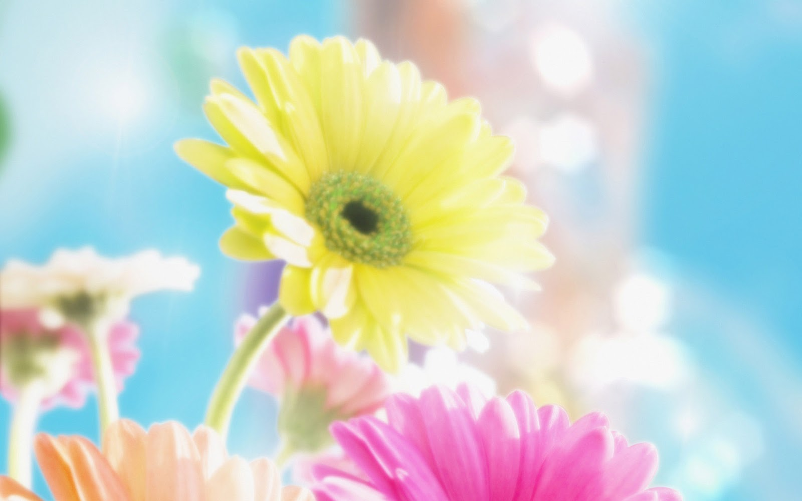 flowers for flower lovers Flowers background desktop wallpapers 1600x1000