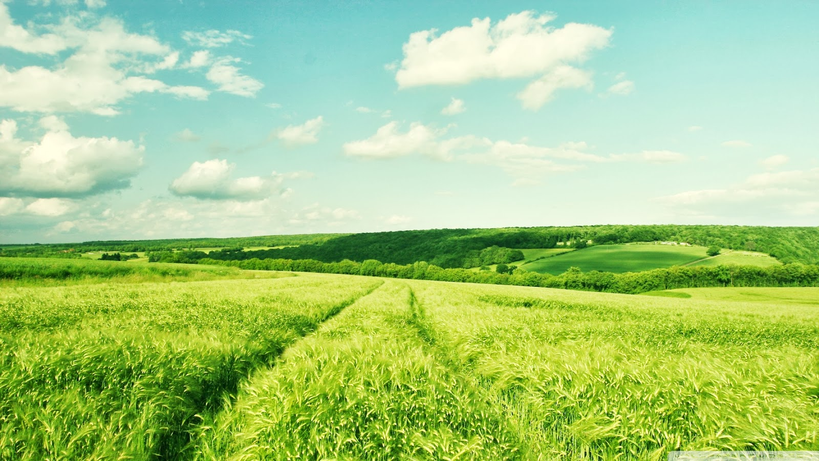 Summer Nature Desktop Background Apps Directories 1600x900