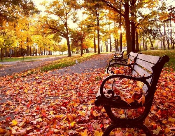 Fall Background Wallpapers Desktop Wallpapers 600x465