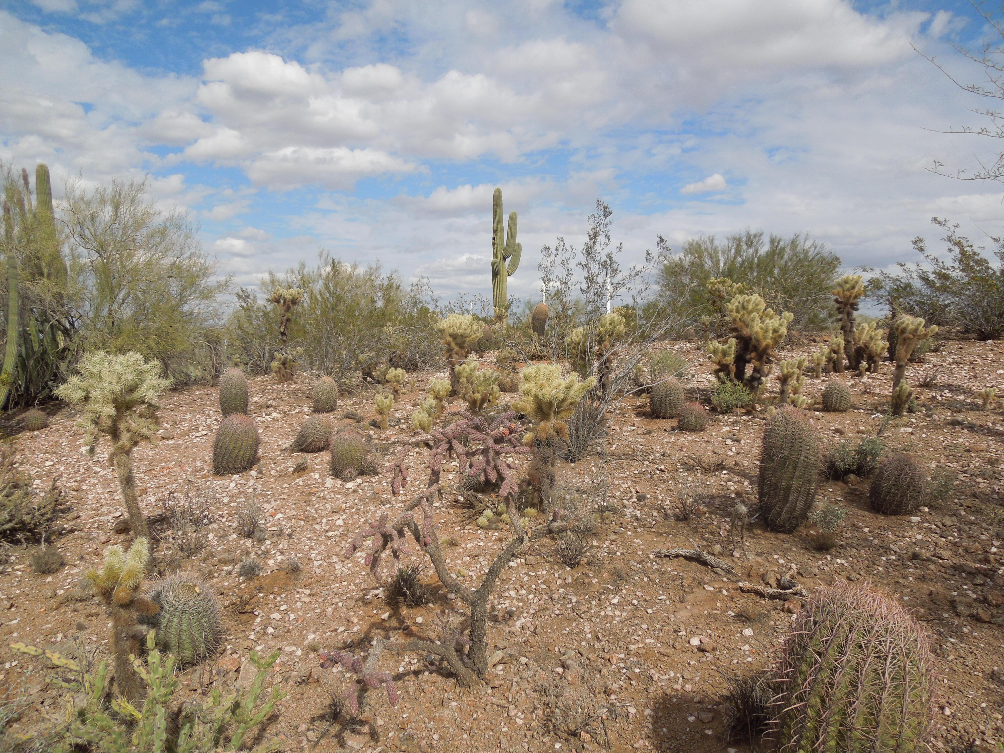 FileDesert Botanical Garden Phoenix Arizona 34JPG   Wikimedia 4000x3000