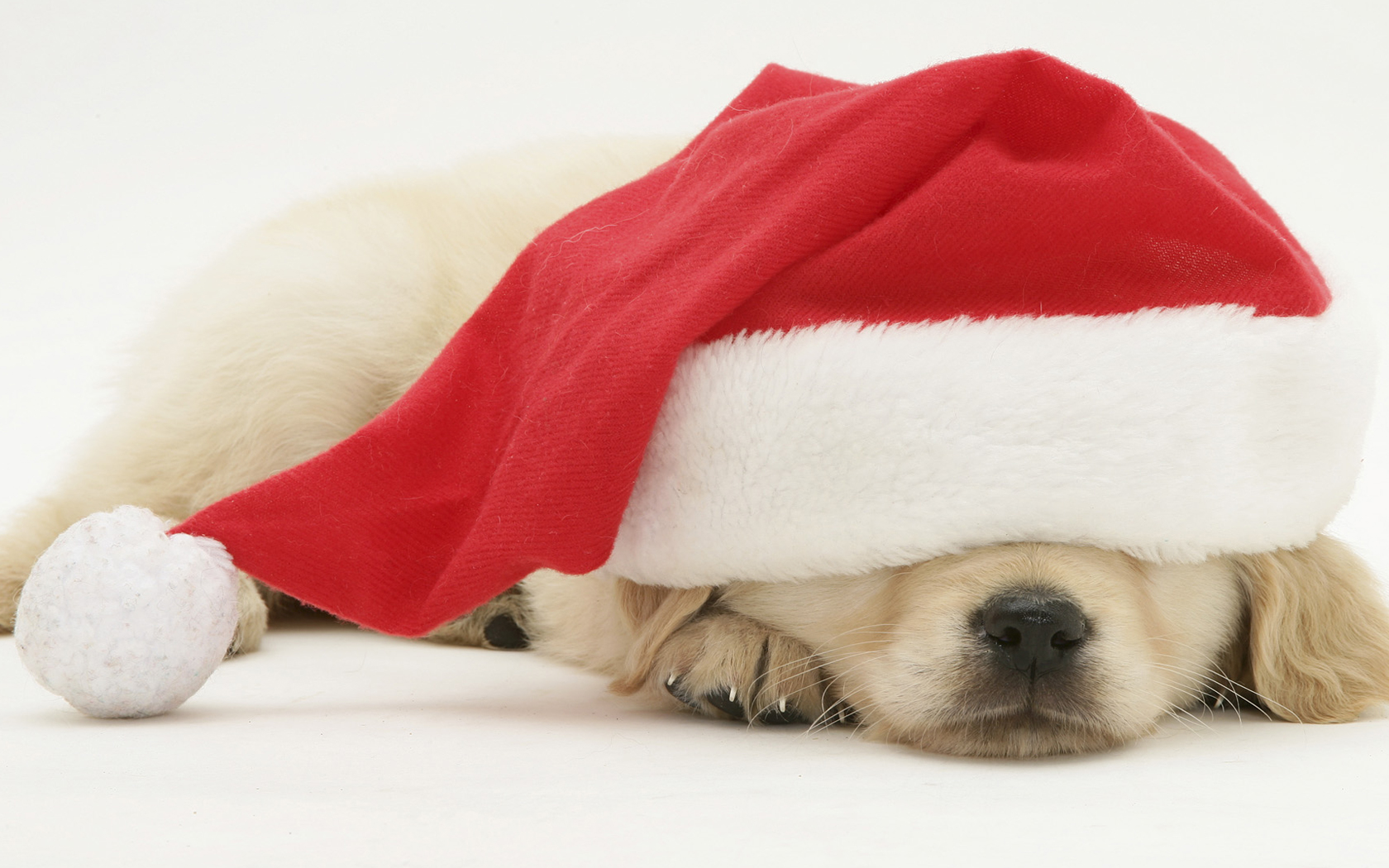 Animal desktop background cute dog Christmas Wallpaper Animal 1680x1050