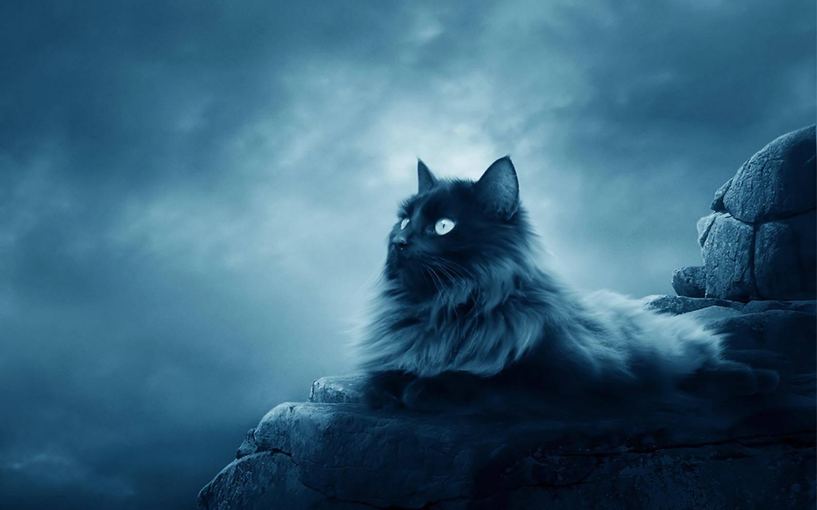 indoor cat meowing at outdoor cat