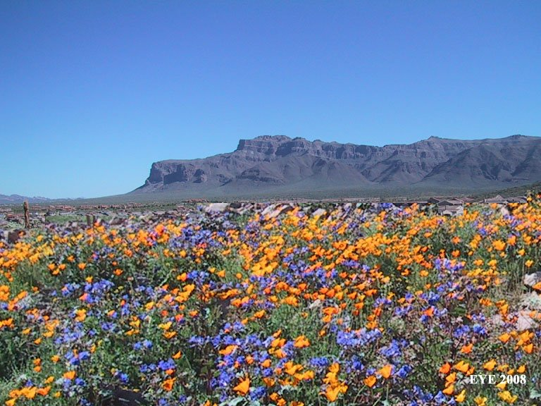 Sonoran Desert in the spring Tucson and Arizona Pinterest 768x576