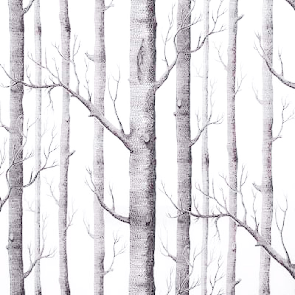 White Birch Wallpaper Wallpapersafari