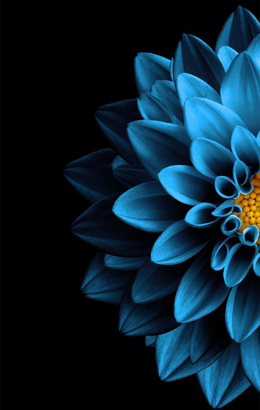 Free Download Blue Flower Nature In 2019 Black Background