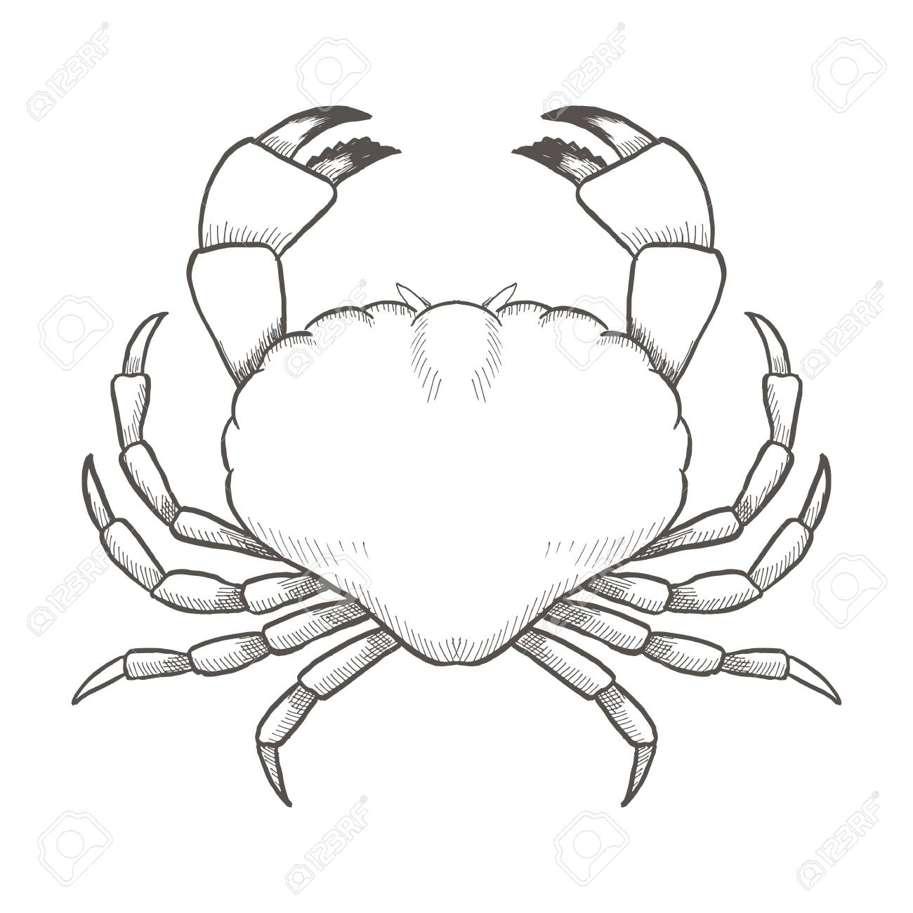 Crab Drawing On White Background Hand Drawn Outline Vintage 1300x1300