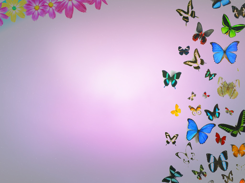 Butterflies And Flowers Backgrounds For PowerPoint   Flower PPT 1024x768