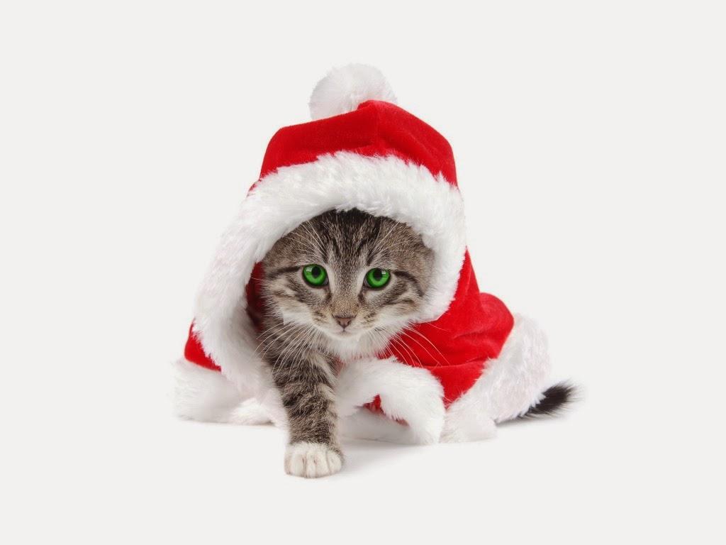 Cat Christmas gift wallpapers   beautiful desktop wallpapers 2014 1024x768