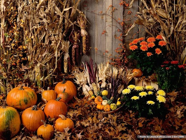 Fall Harvest Wallpaper Harvest display   pumpkins 640x480