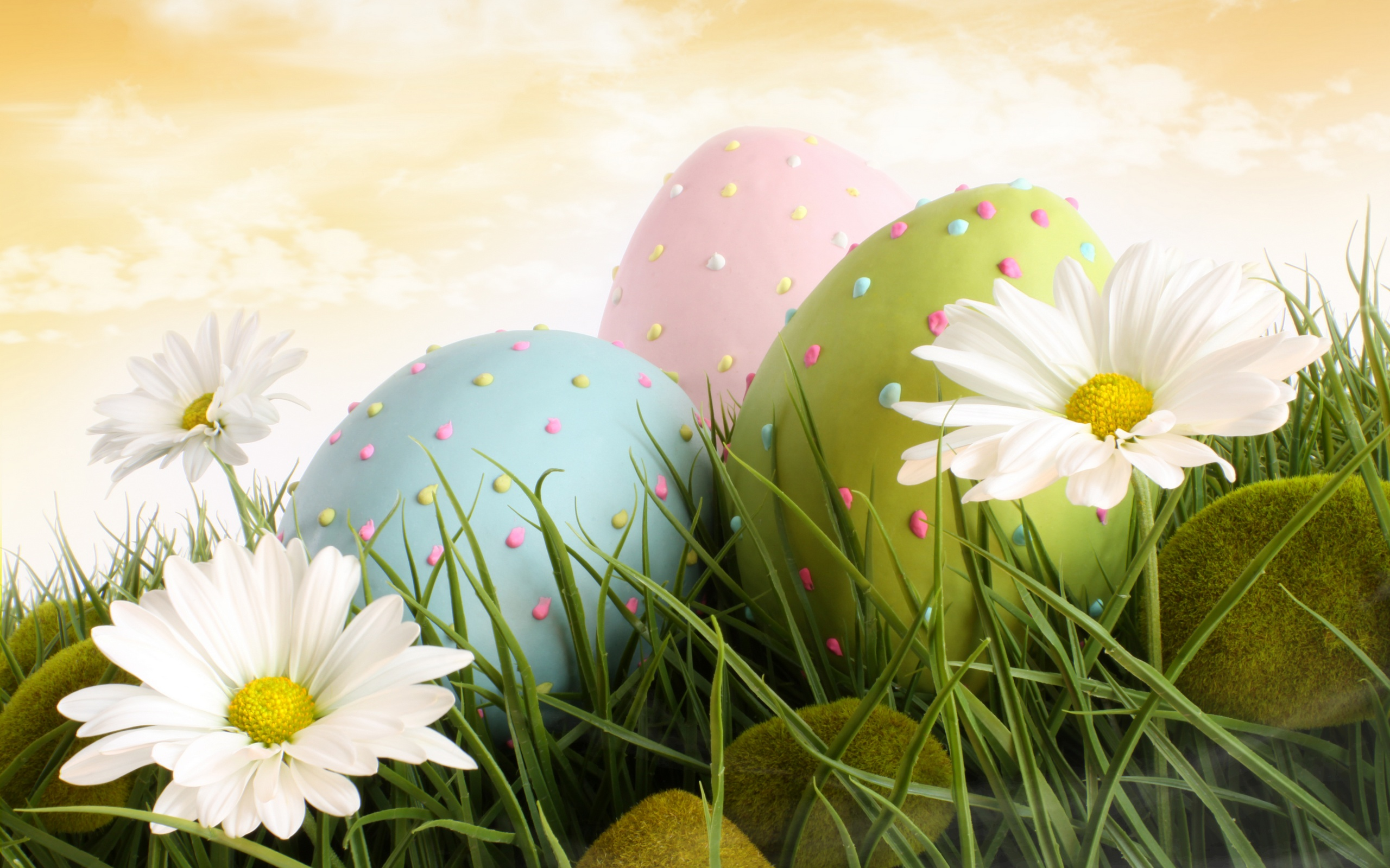 HD Bunnies And Easter Wallpapers Desktop Backgrounds Funmole 2560x1600